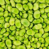 Fava ou fond ou modèle de fève. image stock