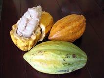 Fave di cacao Fotografia Stock