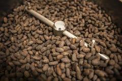 Fave di cacao fotografie stock libere da diritti