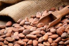 Fave di cacao e paletta di legno immagine stock