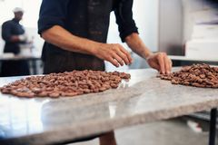 Fave di cacao examing della mano dell'operaio di fabbricazione di cioccolato fotografia stock libera da diritti
