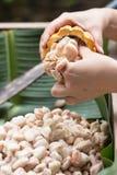 Fave di cacao fresche nella mano di un agricoltore Fotografie Stock