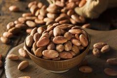 Fave di cacao organiche crude fotografie stock