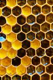 Favi con miele Sfondo naturale fotografie stock libere da diritti