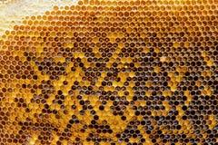 Favi con miele Sfondo naturale immagine stock