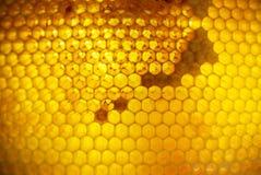Favi dell'oro in pieno di miele Fotografia Stock Libera da Diritti