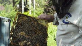 Favi della tenuta dell'apicoltore con le api stock footage