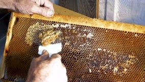 Favi di apertura dell'apicoltore con il coltello dell'ape Un apicoltore che usando una coltello-forcella per tagliare la cera dal video d archivio