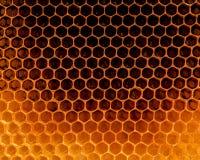 Favi organici crudi del primo piano Honeycom recentemente tirato dell'ape del miele Fotografia Stock Libera da Diritti