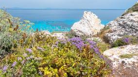 FAVIGNANA-Ö, SICILIEN Medelhavs- skura flora höger över turkoshavet, med rosmarin och andra örter och smaktillsatser arkivbild