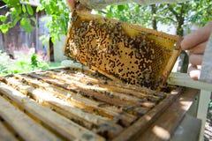 Favo con le api ed il miele Immagine Stock Libera da Diritti