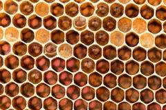 Favo con miele dolce Immagine Stock