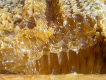 Favo con miele, primo piano, macro immagini stock