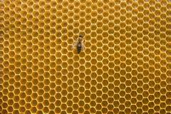 Favo de mel imagem de stock
