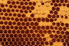 Favo de mel - close up IV Imagem de Stock