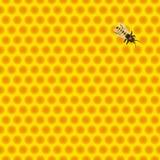 Favo de mel com abelha Imagens de Stock Royalty Free