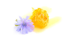 Favo de mel com as flores no fundo branco Fotos de Stock
