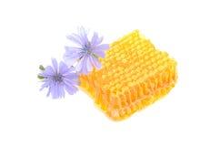 Favo de mel com as flores no fundo branco Fotografia de Stock