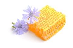 Favo de mel com as flores no fundo branco Imagens de Stock