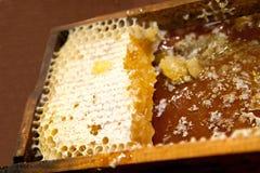 Favo de mel com mel e cera foto de stock royalty free