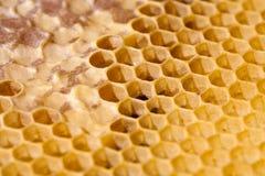 Favo de mel da abelha foto de stock