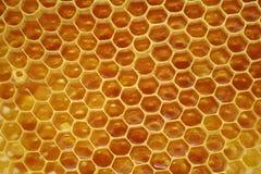 Favo de mel, dentro da colmeia Fotos de Stock Royalty Free