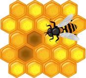 Favo de mel dourado com abelha Fotos de Stock Royalty Free