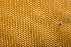 Favo de mel e abelha Imagens de Stock