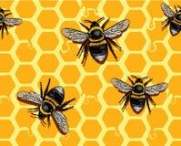Favo de mel e abelhas Fotografia de Stock Royalty Free