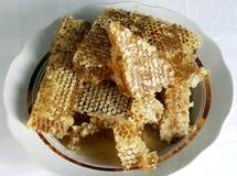 Favo de mel fresco Imagem de Stock
