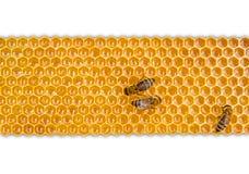 Favo de mel isolado no fundo branco Imagem de Stock