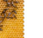 Favo de mel isolado no fundo branco Imagens de Stock Royalty Free