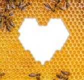 Favo de mel isolado no fundo branco Imagem de Stock Royalty Free