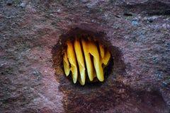 Favo de mel na rocha Foto de Stock