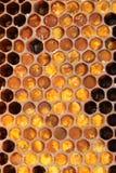 Favo de mel no uso Foto de Stock Royalty Free