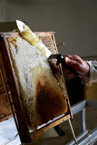Favo de mel que está sendo limpado fotos de stock