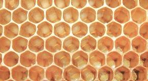 Favo dell'ape, fondo Fotografia Stock