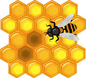 Favo dorato con l'ape Fotografie Stock Libere da Diritti