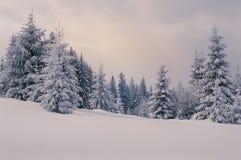 Favola di inverno nella foresta dell'abete in Carpathians Fotografia Stock
