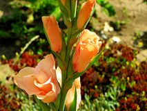 Favoriete bloemen Royalty-vrije Stock Foto