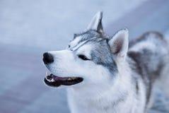 Favoriete Hond Royalty-vrije Stock Fotografie