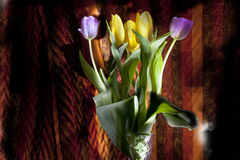 Favoriete tulpen Royalty-vrije Stock Foto