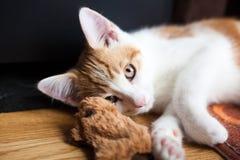 Favorit- Catnipleksak Fotografering för Bildbyråer