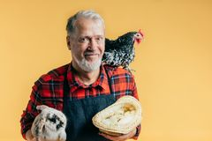 Favorit- ockupation, jobb mannen är förtjust av djur och fåglar royaltyfri fotografi