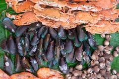 favorit- skaldjur i Thailand royaltyfria bilder