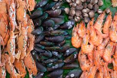 favorit- skaldjur i Thailand arkivfoto