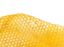 Favos de mel da abelha Foto de Stock