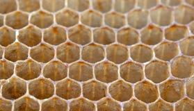 Favos de mel da abelha Imagem de Stock Royalty Free