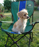 The favourite. The dog sitting on a chair which costs in a garden stock photos