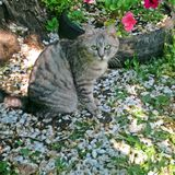A favourite pet. A cat on the stub in the garden Royalty Free Stock Images